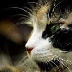Galeria Moa, fotografia, diseño, arte, decoración, cuadros, Carolina Medina, gato, felino, ojos verdes, cat, bigotes
