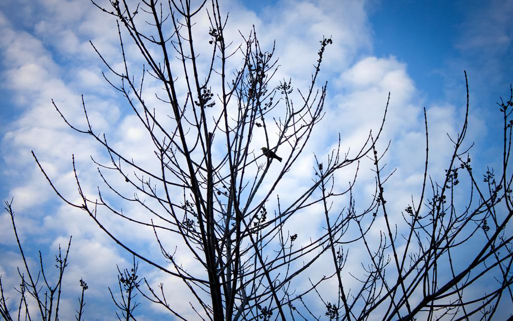 Galeria Moa, fotografia, arte, diseño, decoración, cuadros, Paola, campo , Soto, árbol, pájaro,cielo azul, cumaral, meta, ramas