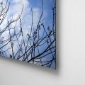 Galeria Moa, fotografia, arte, diseño, decoración, cuadros, Paola, campo , Soto, árbol, pájaro,cielo azul, cumaral, meta, ramas, acabado, aluminio, dilord, retablo