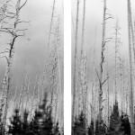 Galeria moa, fotografia, arte, diseño, decoración, cuadros, Camila Currea, incendio, tronco, arboles, Rocky Mountains, Colorado, EU