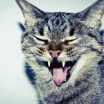 Galeria moa, fotografia, arte, diseño, decoración, cuadros, Camila Currea, gato, felino, bigotes, lengua, gata