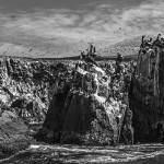 Galeria moa, fotografia, arte, diseño, decoración, cuadros, javier porras, pelicano, isla, Ballestas, cliff, roca, acantilado, mar, pajaro