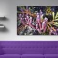 Galeria moa, fotografia, arte, diseño, decoración, cuadros, Santiago Martinez, Cocuy Marino, parque de los nevados, Colombia, nevado, paramo, planta, mata, colores