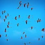 Galeria moa, fotografia, arte, diseño, decoración, cuadros, Santiago Martinez, Flamencos Guajiros, Santuario de Flora y Fauna los Flamencos, camarones, guajira, rosados, Flamencos, rosados, aves