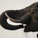 Andrea Torres - Elefante I (Baja)