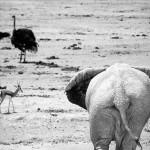 Andrea Torres - Elefante II (Baja)
