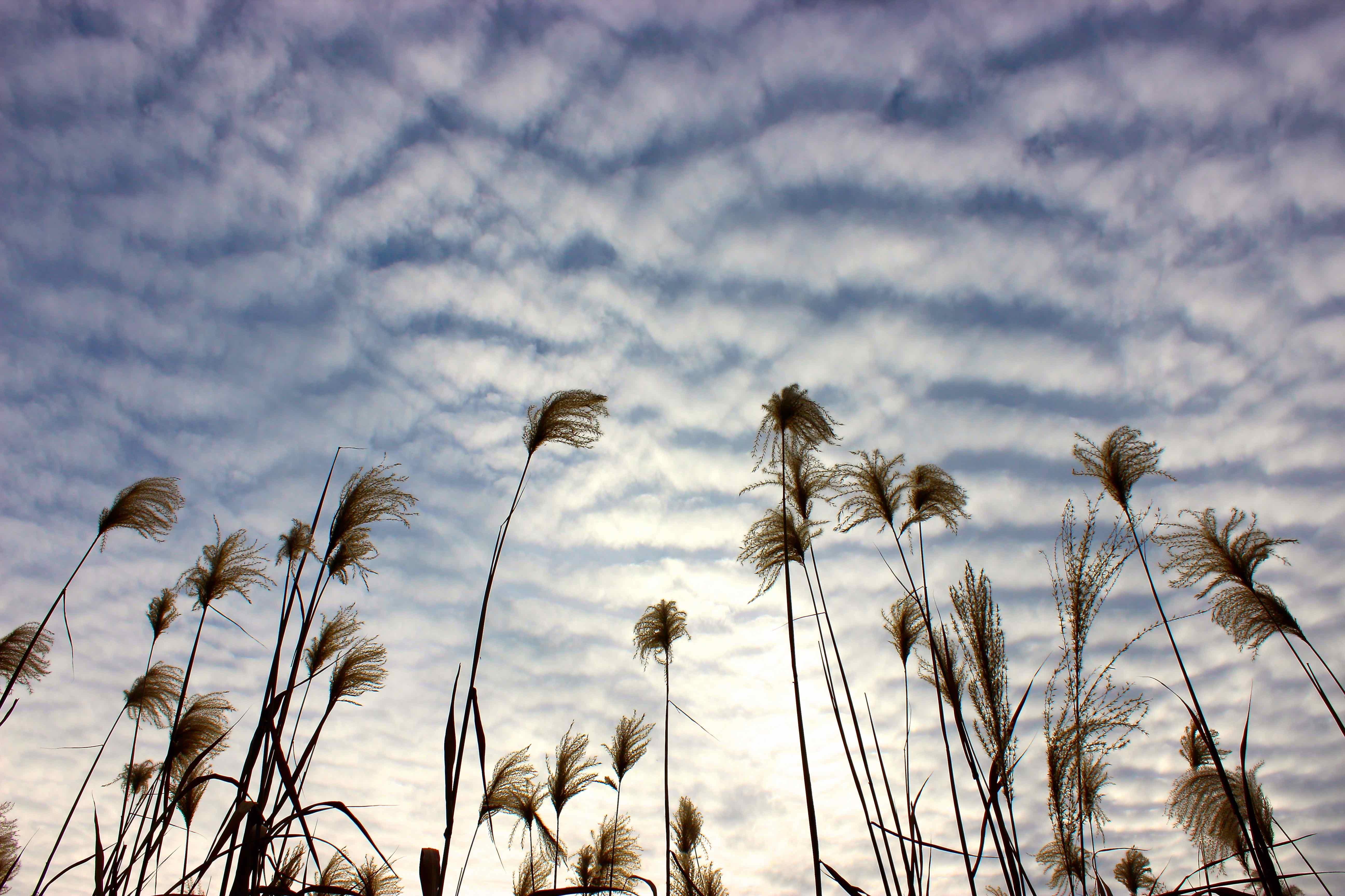Paisaje, nubes, Natalia Pfeifer, Galeria MOA, fotografía, arte, decoración, Japon