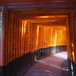 Santuario, Natalia Pfeifer, Galeria MOA, fotografía, arte, decoración, Japon