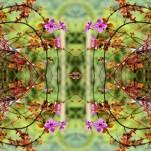 Camila Bruce, fotografia, galeria MOA, arte, diseño, decoracion, flores, collage, naturaleza