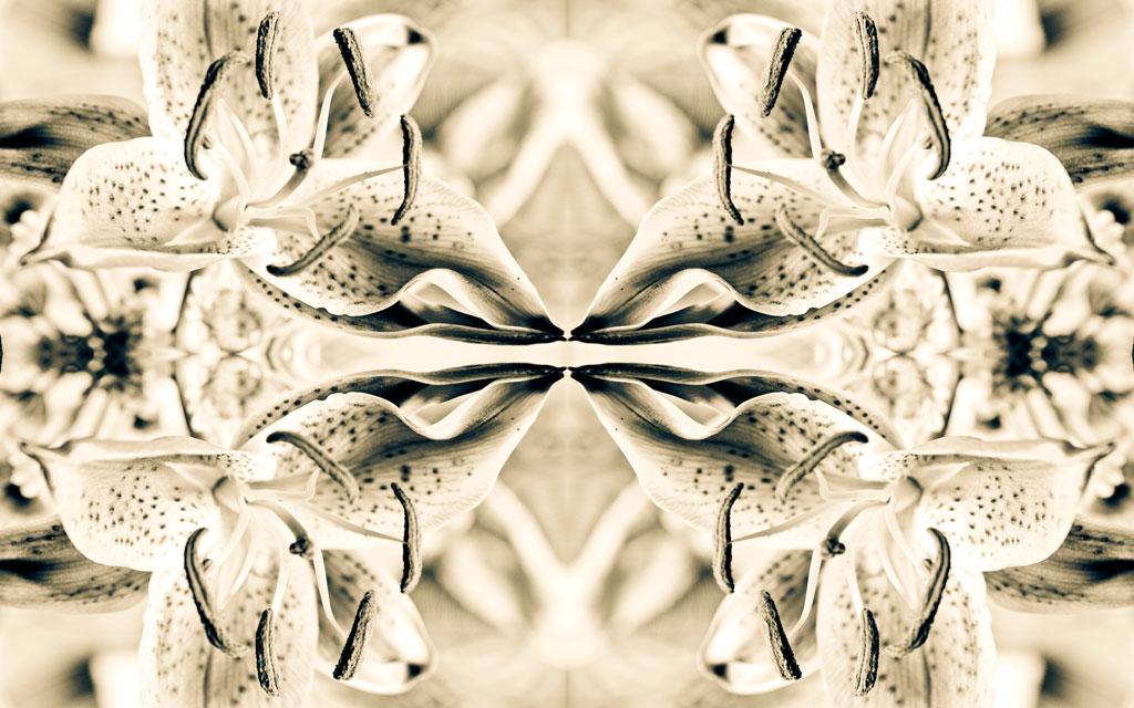 Camila Bruce, fotografia, galeria MOA, arte, diseño, decoracion, flor